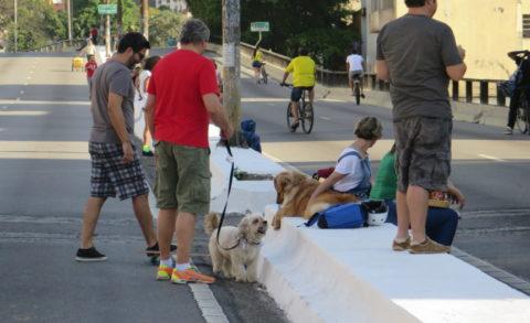 Dogs também têm seu espaço. Foto: Denize Bacoccina