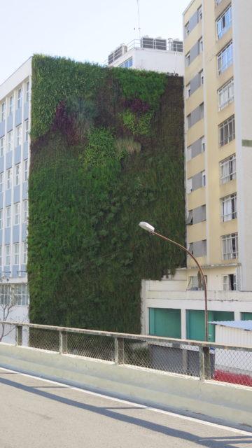 Jardins verticais nos prédios ao longo do Minhocão. Foto: Denize Bacoccina