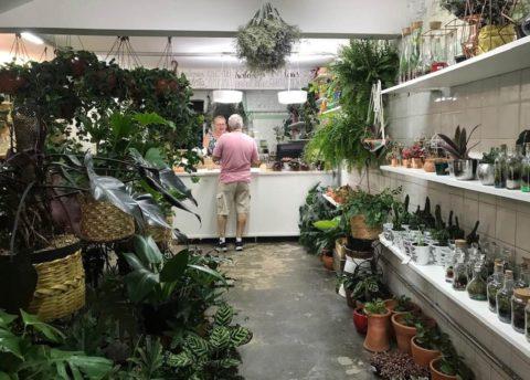 Lojas de plantas no Centro - Blumenfee-Foto CM