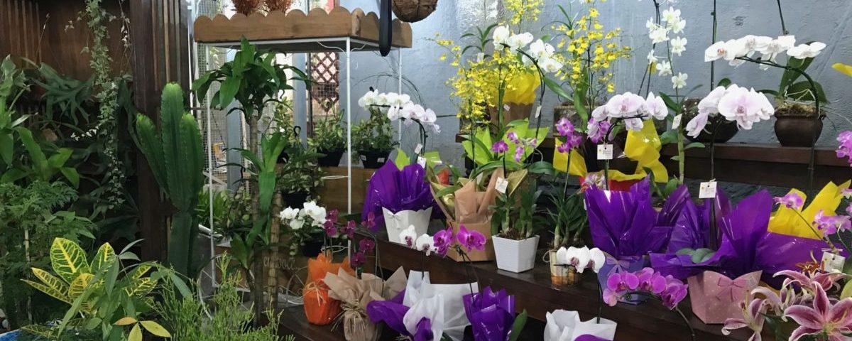 lojas plantas online
